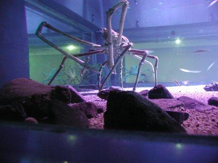 http://www.zoobaq.org/planetazoo/planeta_images/CANGREJO.jpg