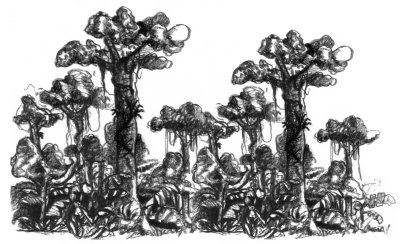 Ecosistemas Humedos